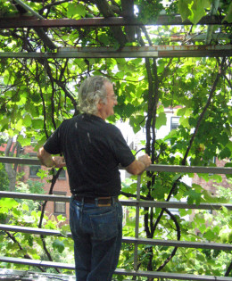 Latif Jiji standing on the roof of his townhouse under his grapevine, looking south toward Midtown Manhattan.