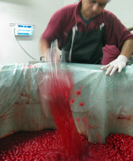 """The maraschino cherry factory where David Selig suspected his bees might be sipping """"nectar""""—that is, high-fructose corn syrup filled with Red Dye No. 40."""