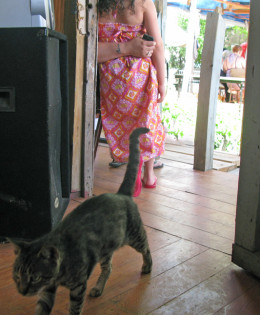 A tabby cat comes back year after year to the community garden to give birth.