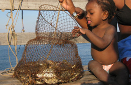 Checking out crabs.